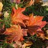 Herbstlaub in Spandau (Foto: Ralf Salecker)