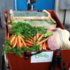 Corona-Hilfe - Spandauer Lastenräder fahren für den guten Zweck