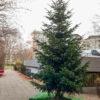 Wünsche für den Weihnachtsbaum - Wünscheaktion